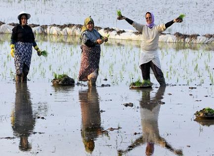 زنان-کشاورز-ایران
